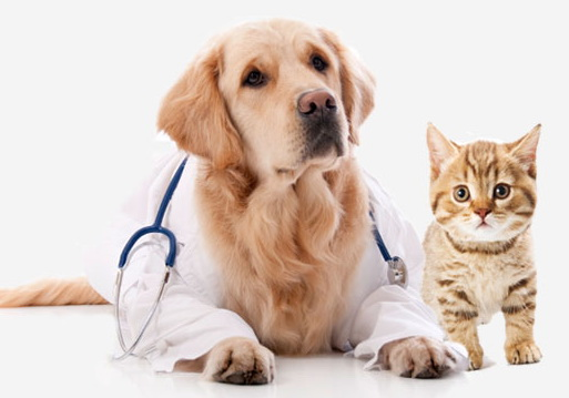 veterinary animal hospitals trivandrum kerala